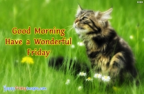 Good Morning. Have A Wonderful Friday